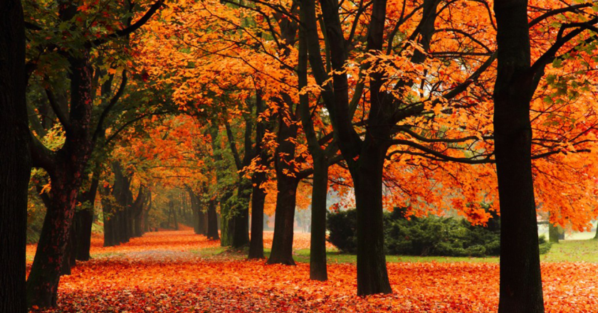What to do during the Fall in Vancouver