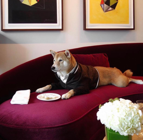 dog-friendly suites at Fairmont Pacific Rim