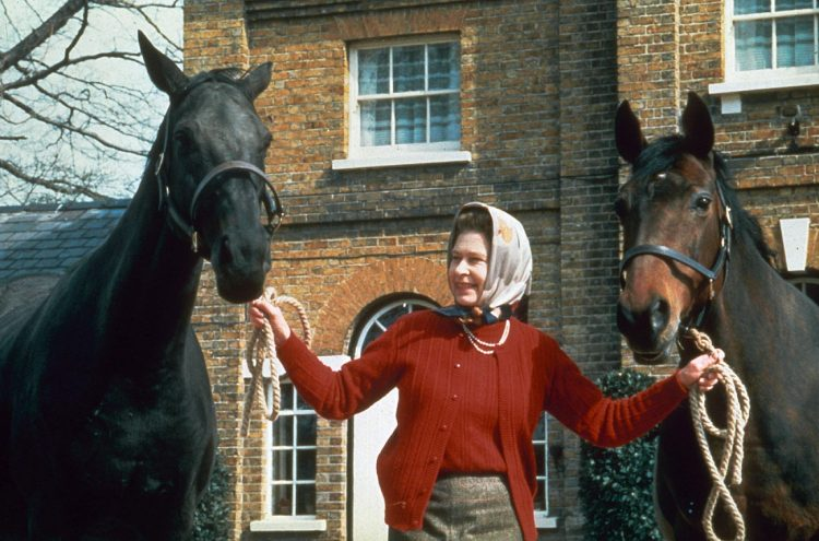 the queen with horses